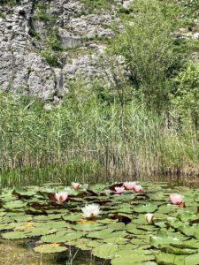 The pond lilies in Botanical garden, Štramberk